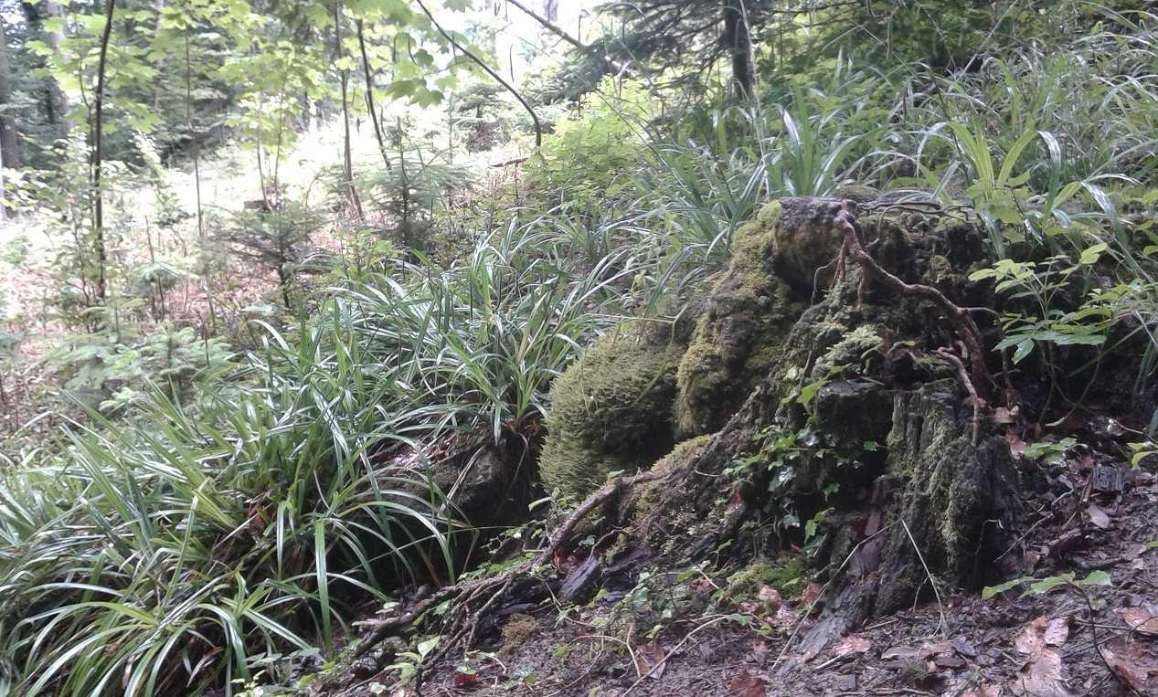 Begehung der Quelle Leumattbach in Pfeffingen