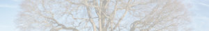Willkommen bei der Gesellschaft für Radiästhesie und Geomantie Region Basel