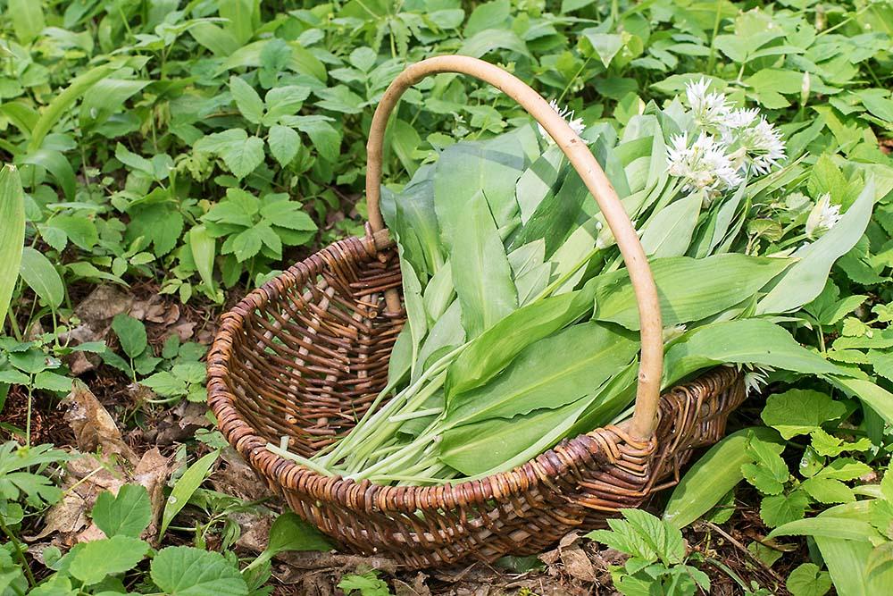 """Vortrag """"Frühlingskräuter auf dem Teller – von der kulinarischen Versuchung der göttlichen Frühlingskräuter"""""""